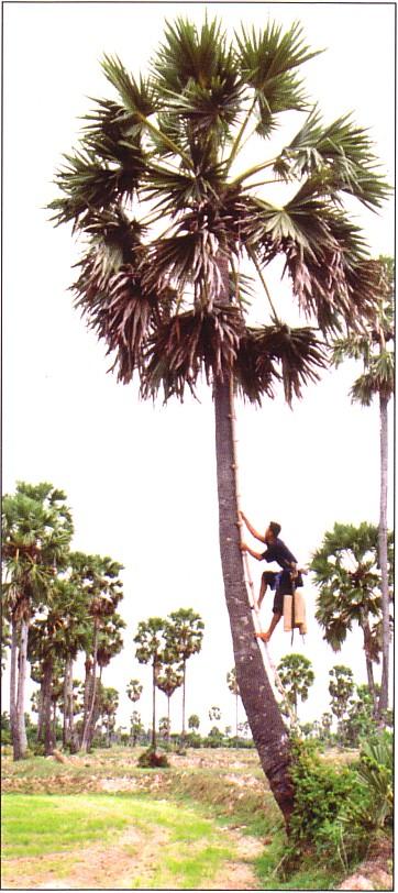 La nature au cambodge for Fabriquer un palmier artificiel